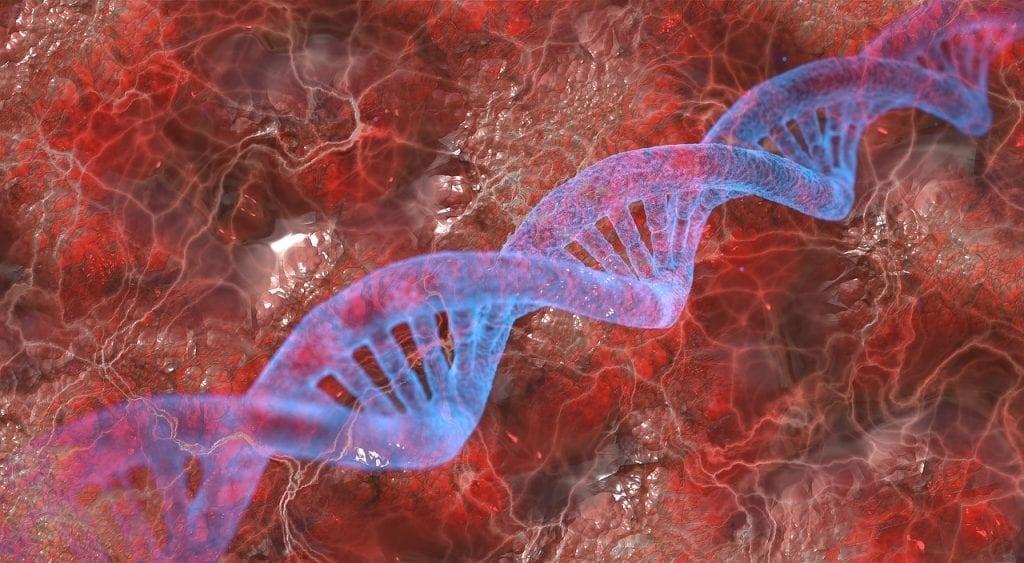 DNA tutkimus